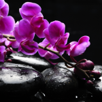 http://localhost/cosmo/wp-content/uploads/2013/12/10/radiant-orchid-culoarea-anului-2014.png