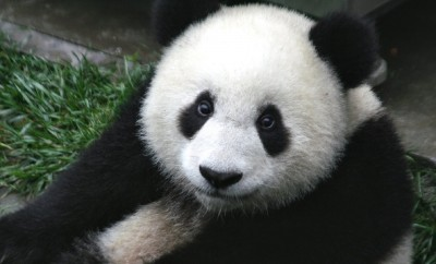 ochi de panda - remedii pentru cearcane