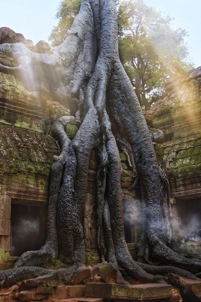 Templul Ta Prohm