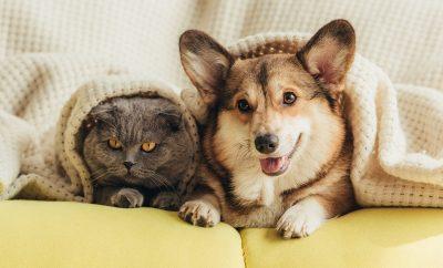 mituri ingrijire animale de companie