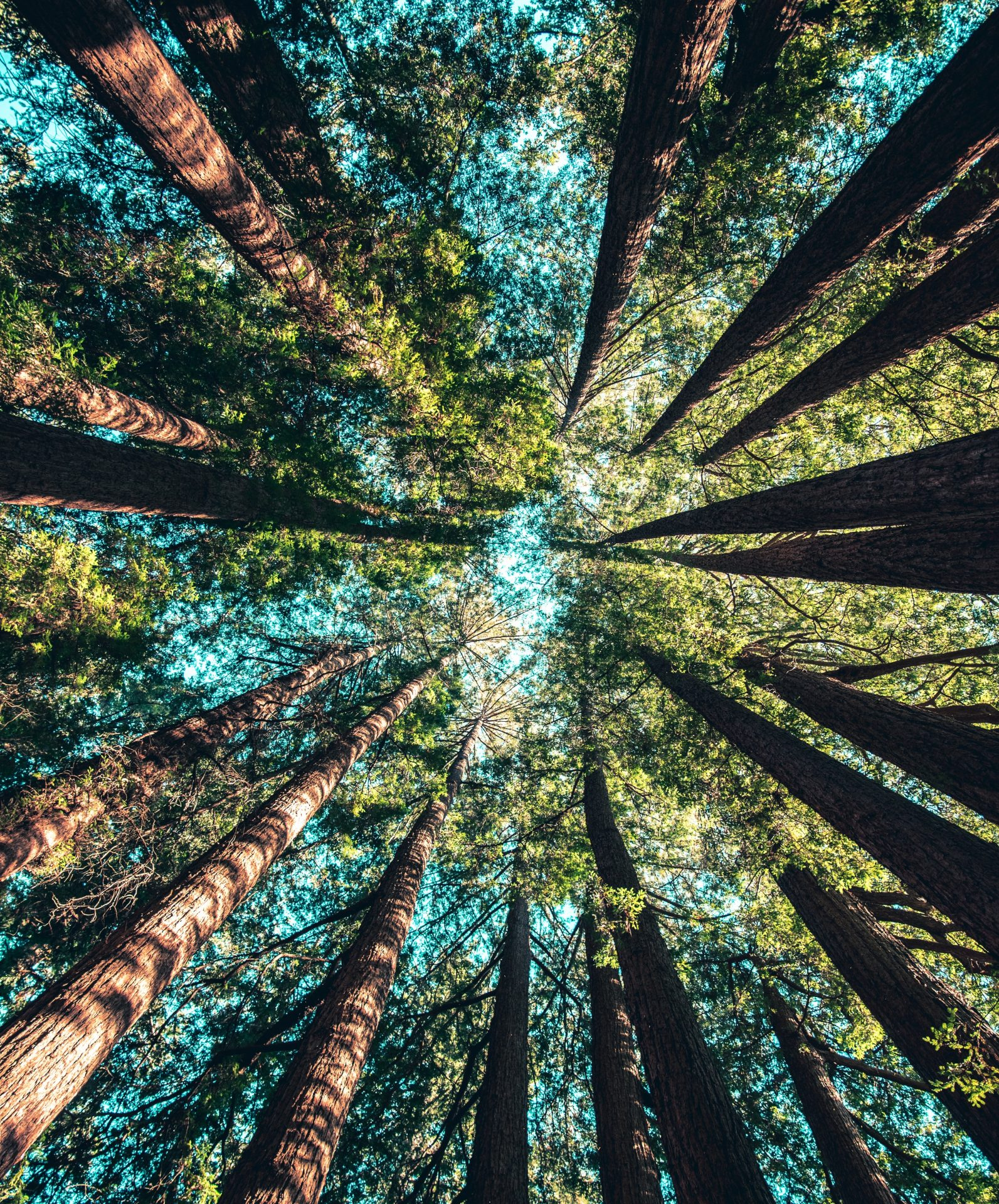copaci priviti de jos in sus